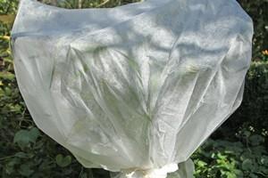 hortensien überwintern zurückschneiden